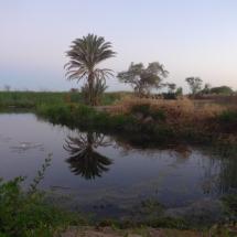 Desert (5)