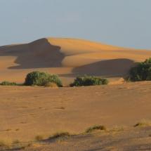 desert (10)