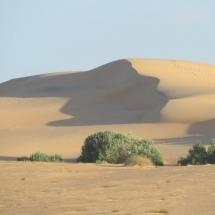 desert (11)
