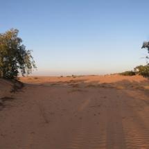 desert (15)