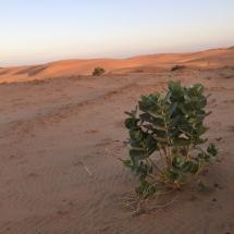 desert (19)