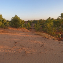 desert (6)