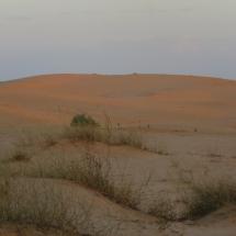 desert (9)